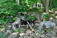 東京都立殿ヶ谷戸庭園 湧水 国分寺市