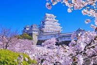 兵庫県 桜の咲く姫路城
