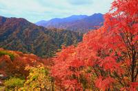 青森県 秋の白神山地・天狗峠から紅葉の山肌