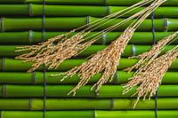 青竹と稲穗