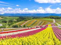 日本 北海道美瑛町 四季彩の丘