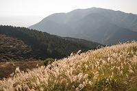 奈良県 葛城山 ススキ