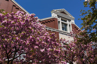 桜咲く春の大阪造幣局