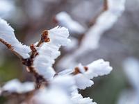 山形県 樹氷
