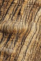 オークの樹皮