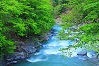 新潟県 秋山郷 初夏の中津川渓谷