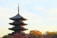 京都府 東寺 夕日に染まる五重塔と紅葉