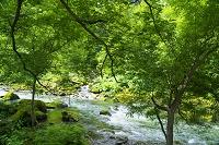 北海道 層雲峡 石狩川 大雪山国立公園