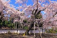 京都府 醍醐寺