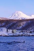 北海道 羅臼岳とトド