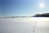 北海道 癒される雪原の丘
