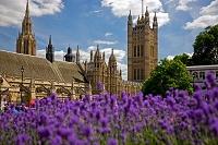 イギリス ロンドン パーラメント・スクエアから見た国会議事堂