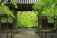 京都府 光明寺 薬医門越しに見る新緑のもみじ参道