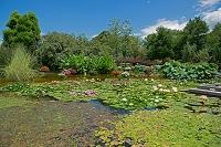 滋賀県 草津 水の森公園 夏景