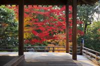 京都府 随心院 本堂から見る庭園の紅葉と山茶花