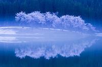 新潟県 津南町 中子の桜