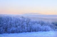 北海道 湿原川沿いの霧氷する木々