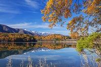 長野県 紅葉の青木湖より白馬三山(白馬鑓ヶ岳,杓子岳,白馬岳)