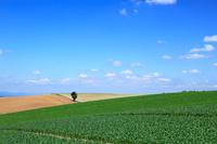 北海道 広大な田園と青空