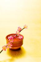 枡の酒と梅の花