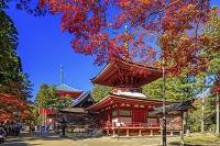 和歌山県 高野山 金剛峯寺 紅葉と東塔と根本大塔