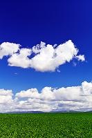 北海道 ビート畑の丘と雲流れる青空