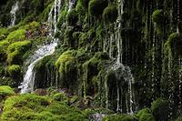 秋田県 元滝伏流水と苔