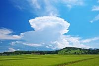 山形県 水田と雲