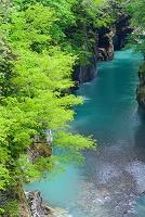 石川県 白山市 手取峡谷 不老橋から望む