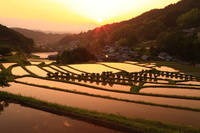 奈良県 明日香村 棚田