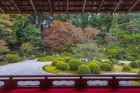 京都府 曼殊院庭園