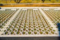 駐車場 緑化舗装ブロック ジオグリーン