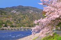 京都府 嵐山 渡月橋と桜