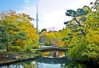 東京都 向島百花園 東京スカイツリー