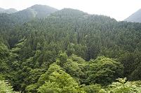 檜原村 植林された山の斜面