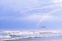 千葉県 九十九里浜 カモメと虹