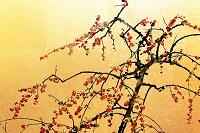 金屏風と梅