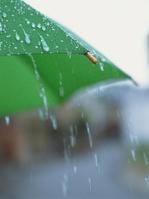 梅雨 傘に降る雨