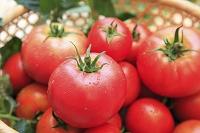 籠に入った収穫したてのトマト