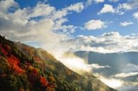 奈良県 紅葉した山肌と雲海