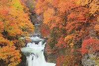 宮城県 作並付近 鳳鳴四十八滝 紅葉