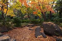 東京都 名主の滝公園 秋