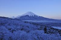 樹氷と富士