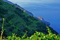 イタリア チンクエテルレのワイン畑と地中海