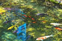 東京都 八雲神社のモネの池