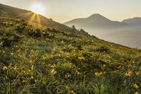 長野県 ニッコウキスゲ咲く草原と朝日