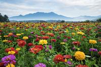 山梨県 花の都公園