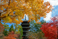 仁和寺 秋の五重塔