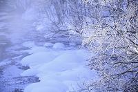 厳冬の川辺