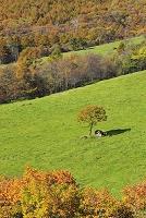 山梨県 北杜市 大泉町 八ヶ岳牧場 牧場と紅葉